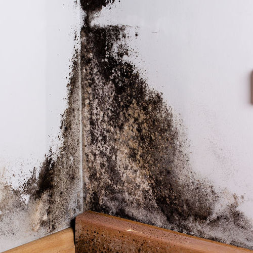 A Wall Covered in Mold